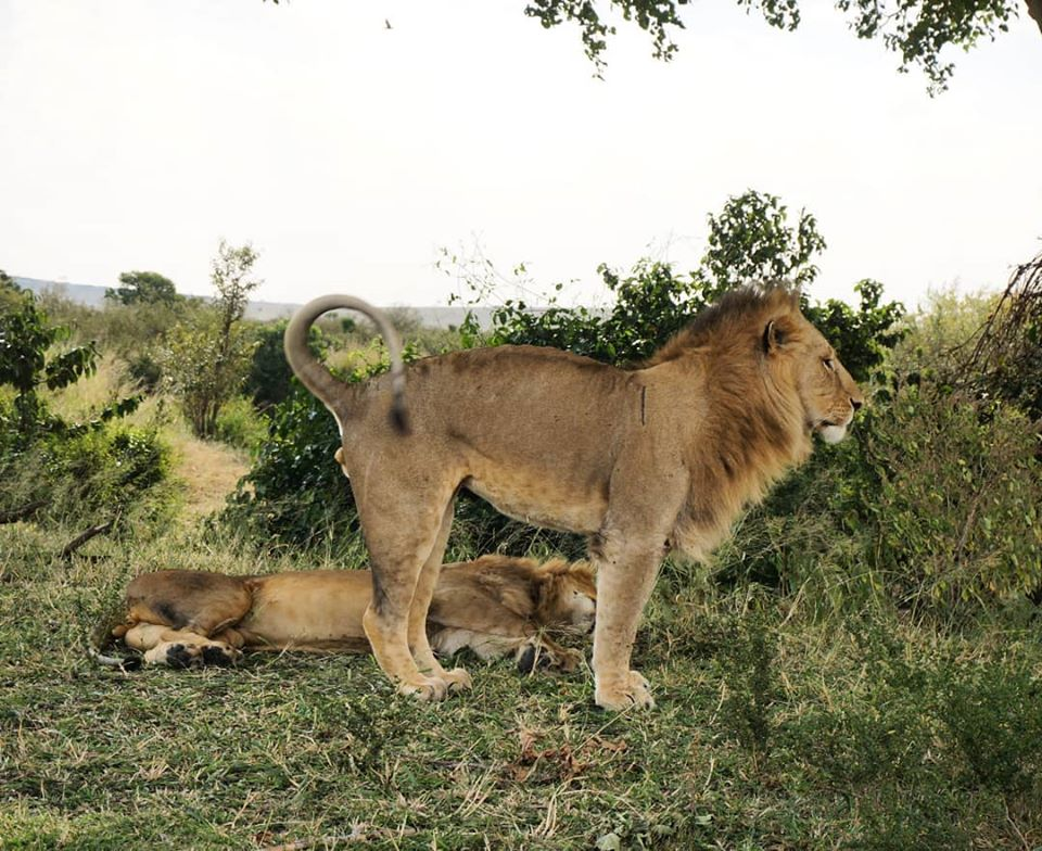 expedition-kenya-safari-tanzania